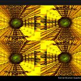 Sonnenblumen Quadratur